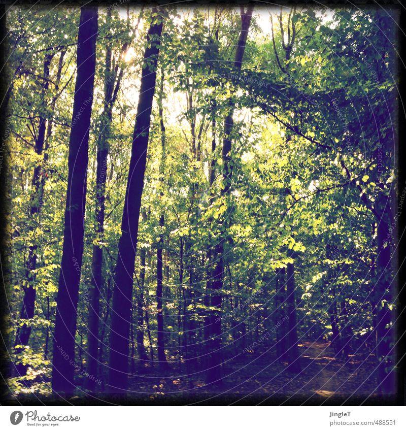 lichtschön Umwelt Natur Herbst Baum Wald entdecken Blick authentisch braun gelb gold grün weiß Gefühle Stimmung Fröhlichkeit Überraschung Bewegung