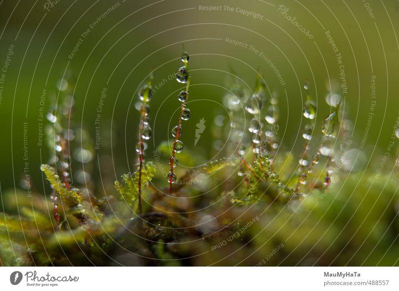 Moos und Wassertropfen Natur Pflanze Tier Urelemente Herbst Klima Regen Garten Park Feld Wald Gefühle Frühlingsgefühle Euphorie Coolness Optimismus Macht