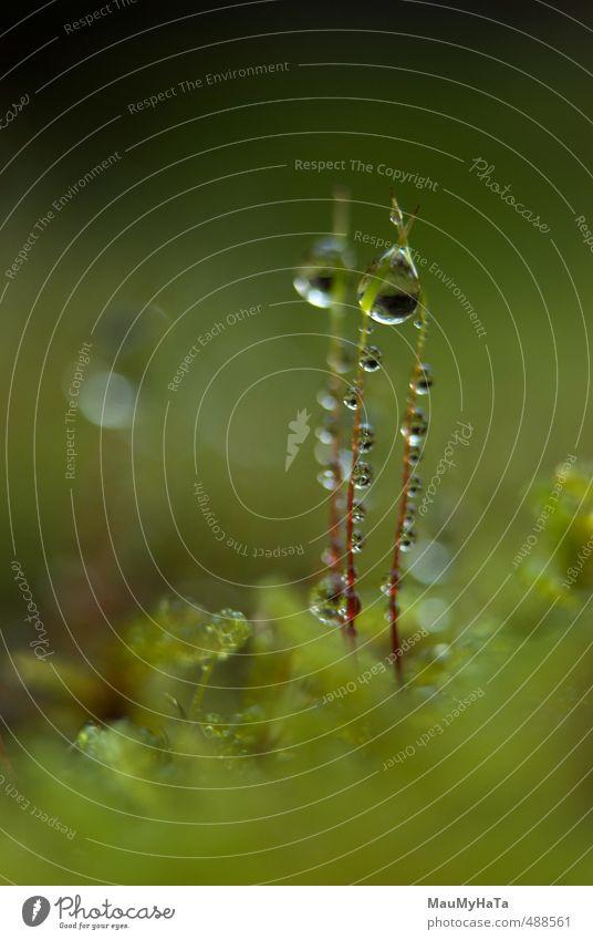 Moos und Wassertropfen Natur Pflanze Herbst Klima Wetter schlechtes Wetter Regen Garten Park Wald Felsen Berge u. Gebirge Fröhlichkeit Frühlingsgefühle Euphorie