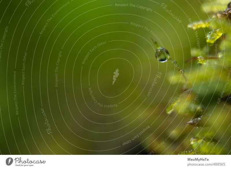 Moos und Wassertropfen Natur Pflanze Urelemente Herbst Klima Klimawandel schlechtes Wetter Nebel Regen Garten Park Wald Felsen Fröhlichkeit Euphorie Coolness