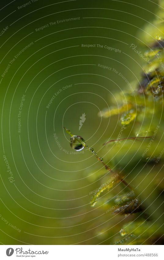Moos und Wassertropfen Natur Pflanze Urelemente Herbst Klima schlechtes Wetter Regen Park Wald Felsen Berge u. Gebirge Gefühle Fröhlichkeit Frühlingsgefühle