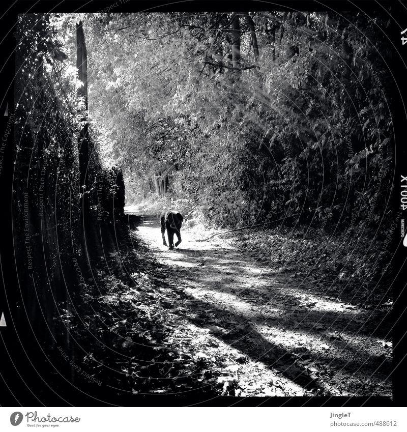 homerun Umwelt Natur Landschaft Pflanze Herbst Baum Sträucher Park Wald Tier Haustier Hund Labrador 1 gehen genießen schwarz weiß Vorsicht Gelassenheit Erholung
