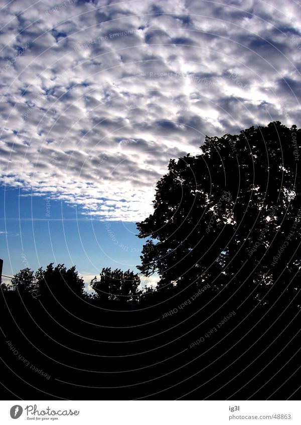 am Abend... Baum Wolken schlechtes Wetter Blatt Silhouette Dämmerung Himmel Kontrast Natur Baumkrone Regen