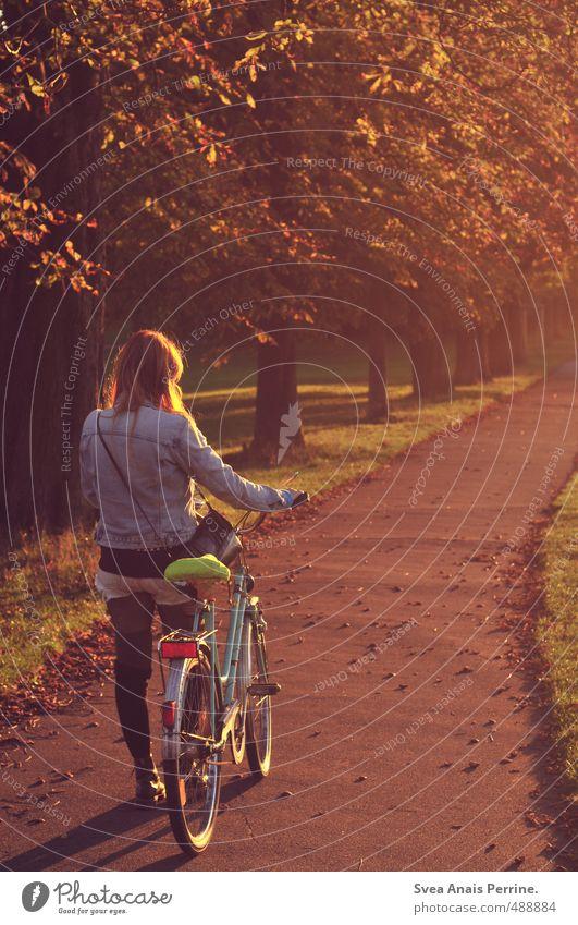 herbst. feminin Junge Frau Jugendliche Haare & Frisuren 1 Mensch 18-30 Jahre Erwachsene Umwelt Natur Sonnenaufgang Sonnenuntergang Sonnenlicht Herbst