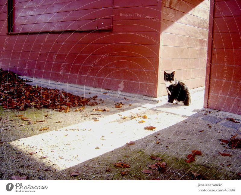 Kätzchen in der Herbstsonne Katze Blatt Einsamkeit mehrfarbig Sonne Schatten einsamkei