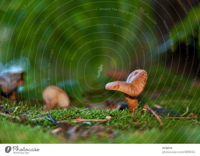 Pilze Natur Ferien & Urlaub & Reisen Pflanze Tier Wald Umwelt Bewegung Gras Gesundheit Denken Gesundheitswesen Kraft frisch Tourismus wandern Energie
