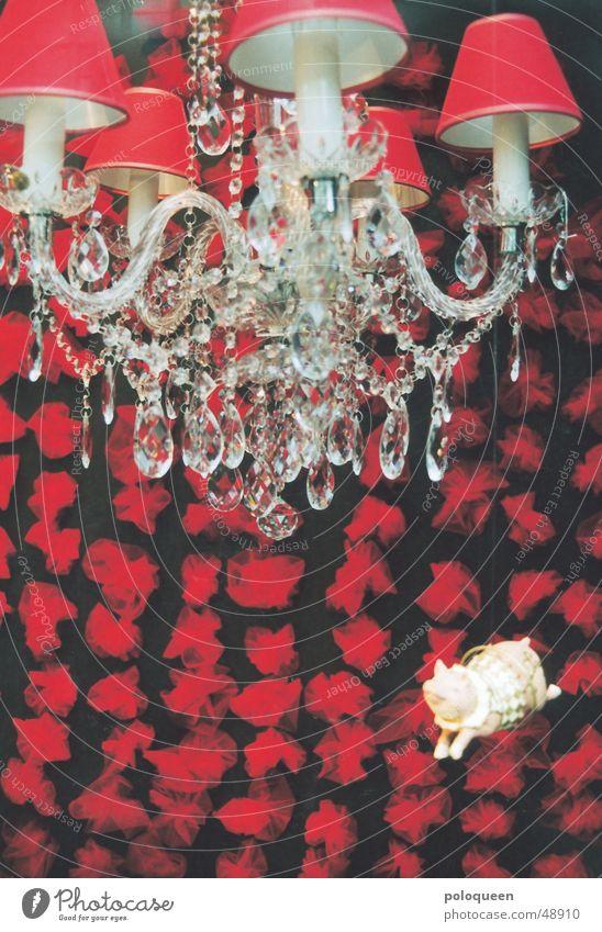 enlighted pig Schwein Ferkel Schaufenster Kronleuchter rot Lampe Kitsch