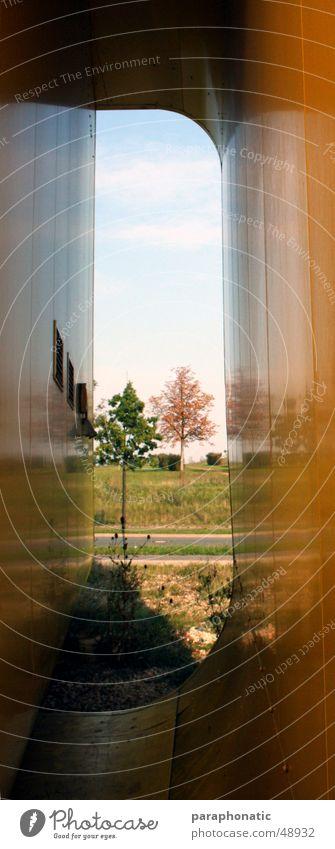 Enge! Durchblick Wiese Baum Sträucher gelb eng Außenaufnahme Haarschnitt Natur Landschaft Farbe Freiheit