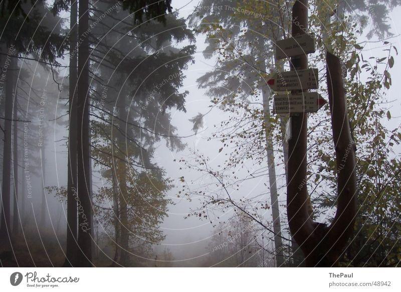 Wegweiser im Nebel Wald Baum Gespensterwald wandern Fußweg ruhig Trauer Einsamkeit Außenaufnahme Traurigkeit spukhaft