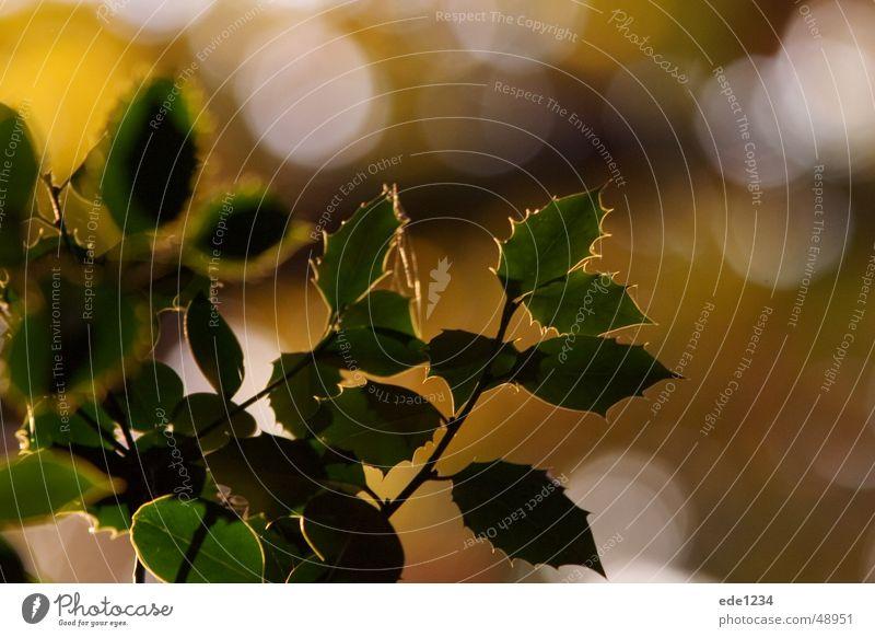 Blätter im Herbst pflanze strauch gegenlicht herbst warm licht garten natur bunt friede knospe ast baum grün blatt europa deutschland Wärme