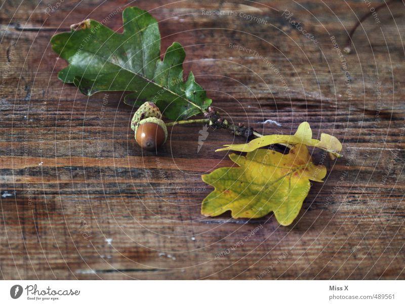 Eicheln Basteln Natur Herbst Blatt Holz braun Eichenblatt Holztisch Maserung Holzplatte Zweig herbstlich Bastelmaterial Herbstlaub Herbstfärbung Baumfrucht