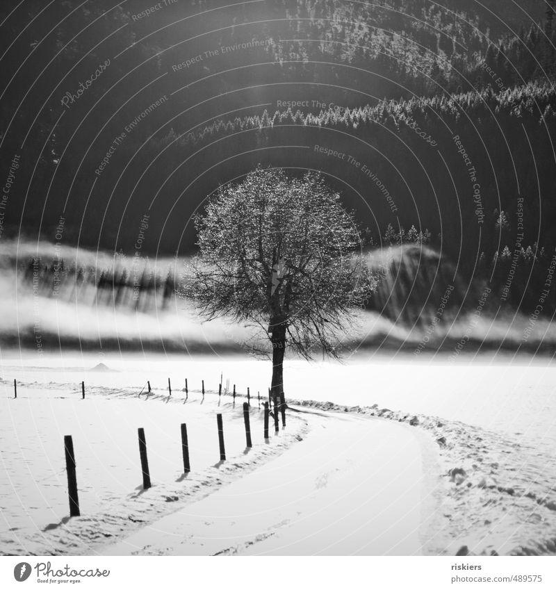 when clouds fall from sky Natur Pflanze Baum Landschaft Winter Wald Umwelt Schnee außergewöhnlich Eis Park Feld glänzend Nebel leuchten Schönes Wetter