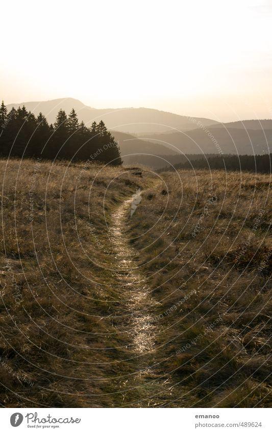Schwarzwaldpfad Ferien & Urlaub & Reisen Tourismus Ausflug Ferne Freiheit Sommer Berge u. Gebirge wandern Natur Landschaft Pflanze Himmel Wetter Baum Gras Wald