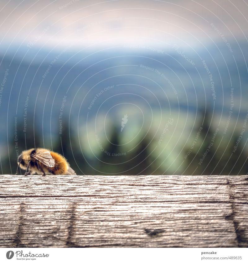zeitumstellung | zurück marsch marsch... Natur Landschaft Tier Ferne Traurigkeit Holz Uhr wandern Zeichen Alpen Biene übersichtlich Allgäuer Alpen