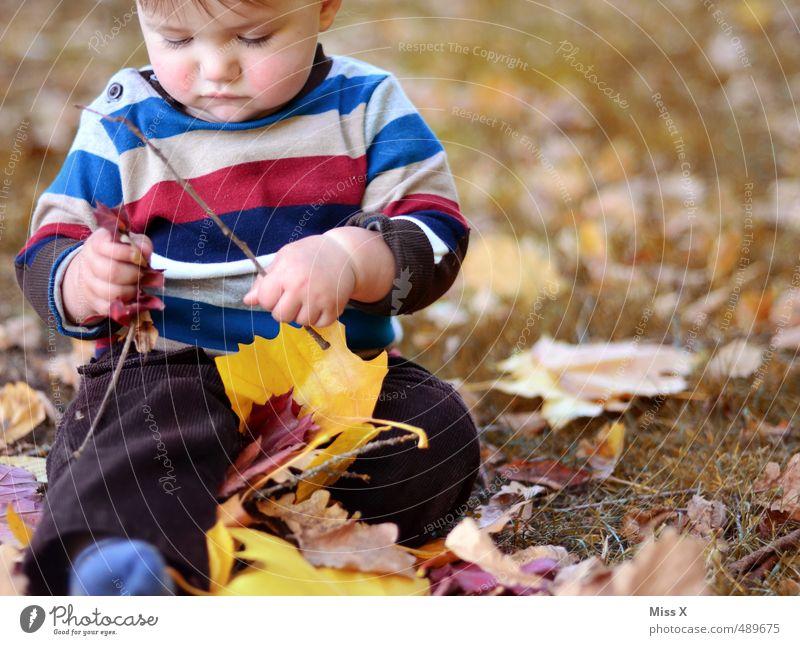 Waldarbeiter Mensch Kind Freude Blatt Gefühle Herbst Spielen Glück Stimmung Freizeit & Hobby Kindheit Zufriedenheit sitzen Baby Fröhlichkeit niedlich