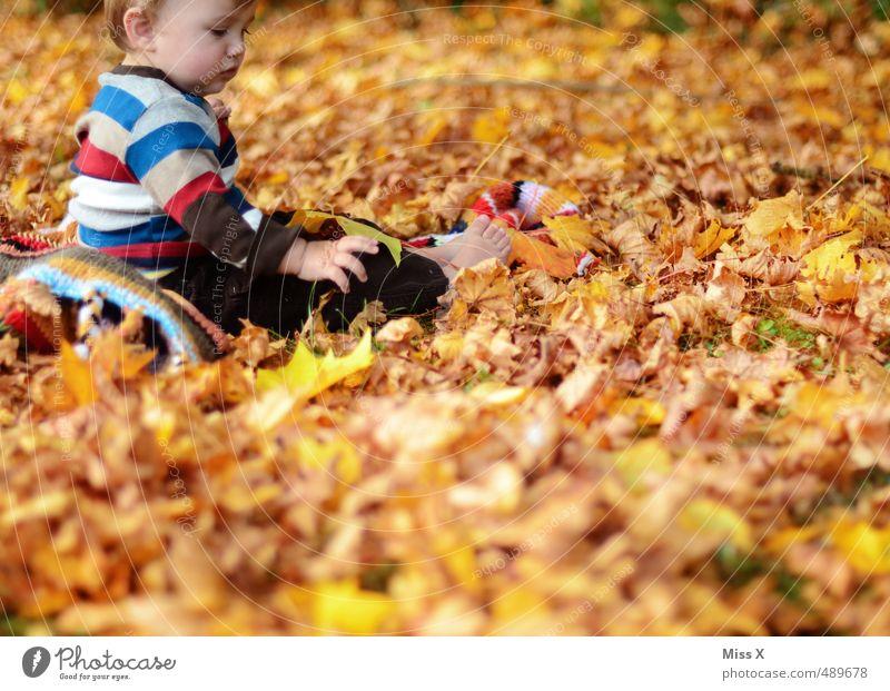 Spielen Mensch Kind Freude Blatt Wald Herbst Spielen Garten Park Freizeit & Hobby Kindheit Zufriedenheit sitzen Baby Fröhlichkeit niedlich