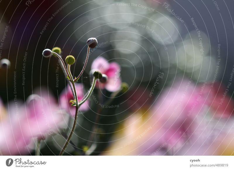 Herbstblüten Natur Pflanze Farbe Sommer Blume gelb Frühling Blüte Garten rosa leuchten Wachstum frisch ästhetisch Zukunft