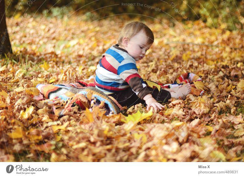 Im Laub Mensch Kind Freude Blatt Wald Herbst Spielen Garten Stimmung Park Freizeit & Hobby Kindheit Zufriedenheit sitzen Baby Fröhlichkeit
