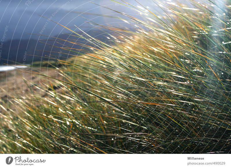 Gras am Meer Umwelt Natur Landschaft Wiese Zufriedenheit Unwetter Erholung Farbfoto Außenaufnahme Menschenleer Schwache Tiefenschärfe