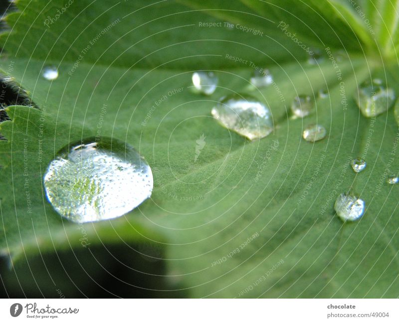 Wassertropfen grün Pflanze Seil Tau silber Teich