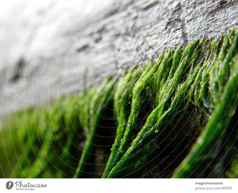 Treibholz Holz Strand Meer Algen Holzmehl Nahaufnahme Baum Unschärfe grün grau alt markro close Baumstamm verfallen Perspektive Detailaufnahme