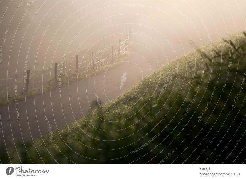 Nebelsonne Natur grün Landschaft Umwelt Straße Wiese Herbst Gras natürlich außergewöhnlich ländlich