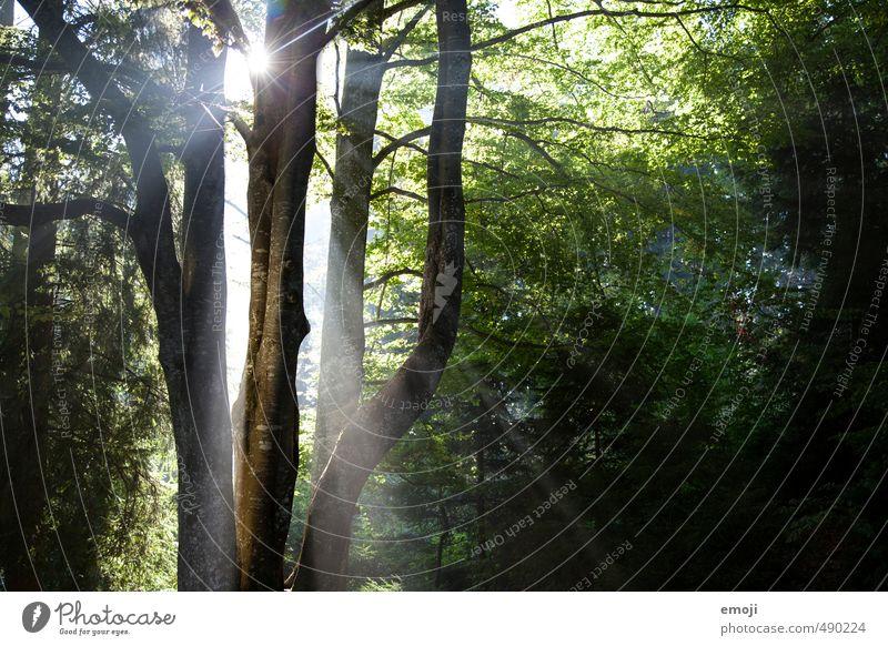 Erleuchtung Umwelt Natur Landschaft Sonne Sonnenlicht Frühling Pflanze Baum Wald natürlich grün Farbfoto Außenaufnahme Menschenleer Tag Licht Schatten