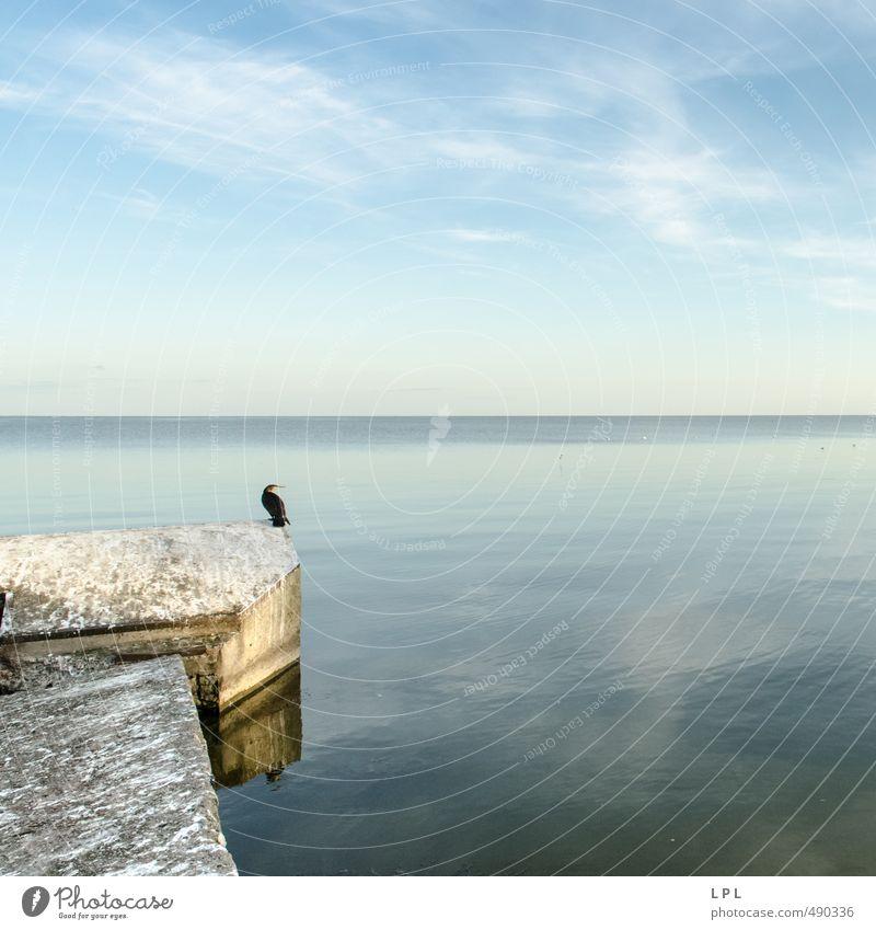 Warten auf Godot : Kurische Nehrung Natur Wasser Himmel Wolken Tier Wildtier Vogel 1 hocken träumen Traurigkeit authentisch Unendlichkeit blau grau Gelassenheit