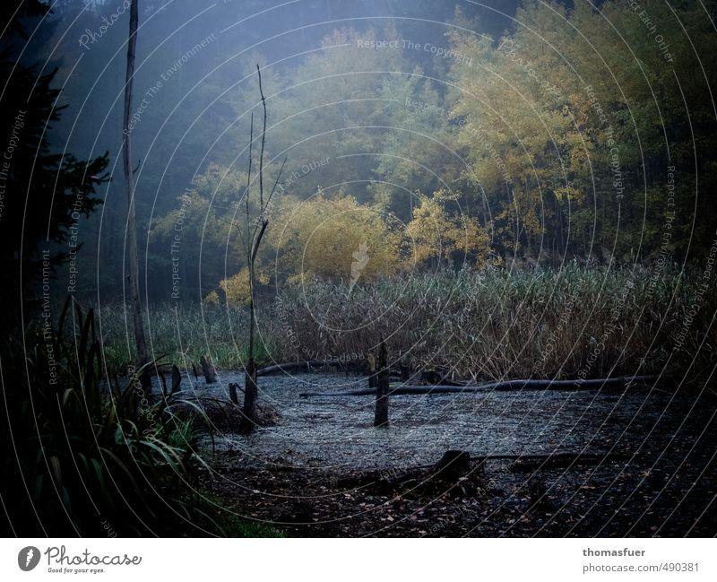 Feuchtgebiet Abenteuer Natur Pflanze Erde Luft Wasser Herbst Baum Gras Sträucher Moos Farn Blatt Wildpflanze Wald Urwald Teich dunkel fantastisch gruselig braun