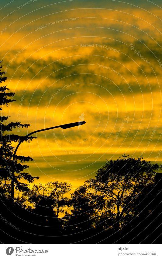 Sommerabend Baum Sonne grün Wolken gelb Straße Horizont Straßenbeleuchtung