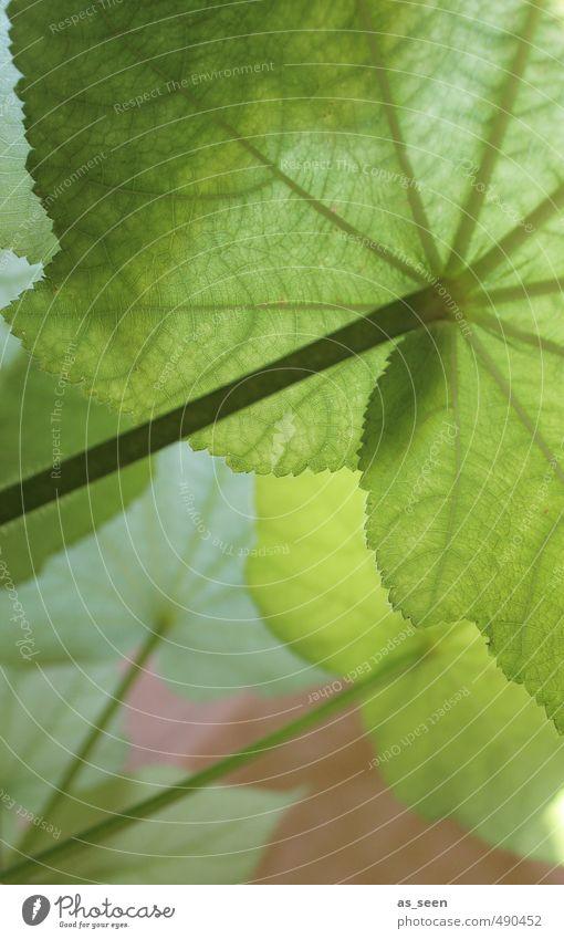 Shades of green I Pflanze Blatt Grünpflanze Topfpflanze Urwald hängen Wachstum ästhetisch frisch natürlich grün rosa türkis Geborgenheit ruhig Design Energie