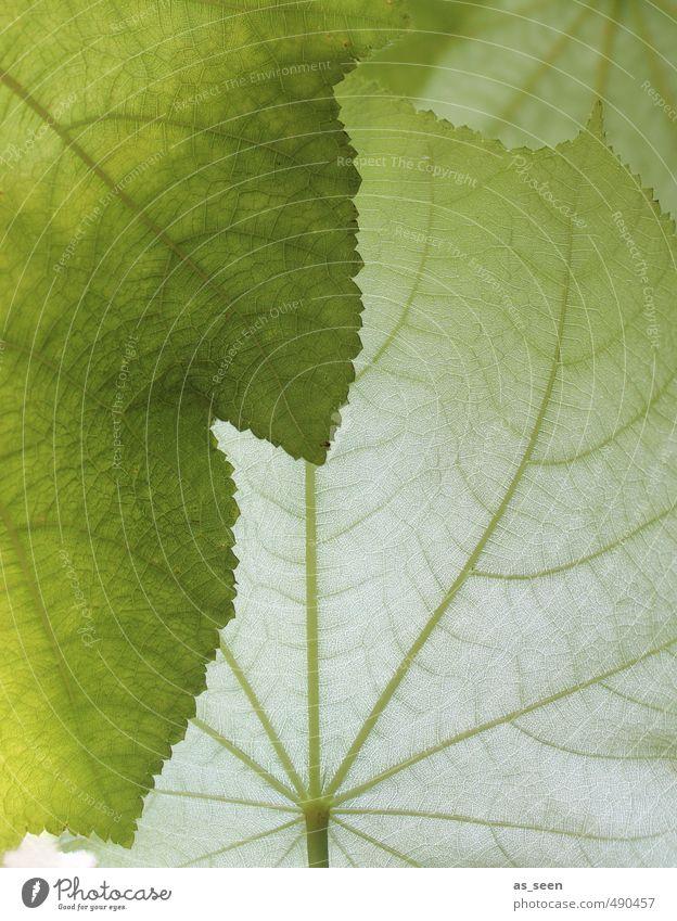 Shades of green II Natur schön grün weiß Farbe Pflanze Erholung ruhig Blatt Umwelt Leben hell Garten Linie elegant Klima