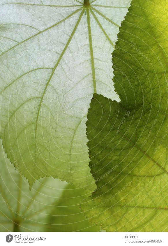 Shades of green III Natur schön grün weiß Farbe Pflanze Blatt Umwelt Innenarchitektur natürlich Gesundheit hell Wohnung Häusliches Leben groß Wachstum
