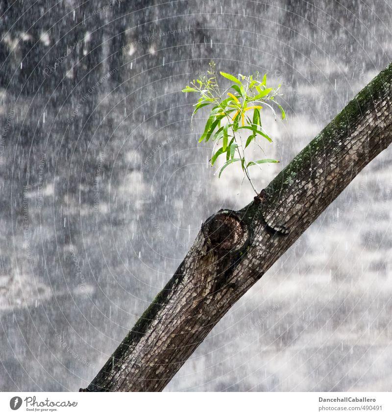 Lebensader Umwelt Natur Wasser Wassertropfen Frühling Sommer schlechtes Wetter Regen Pflanze Baum Blatt Grünpflanze Stadt Stadtzentrum Mauer Wand elegant