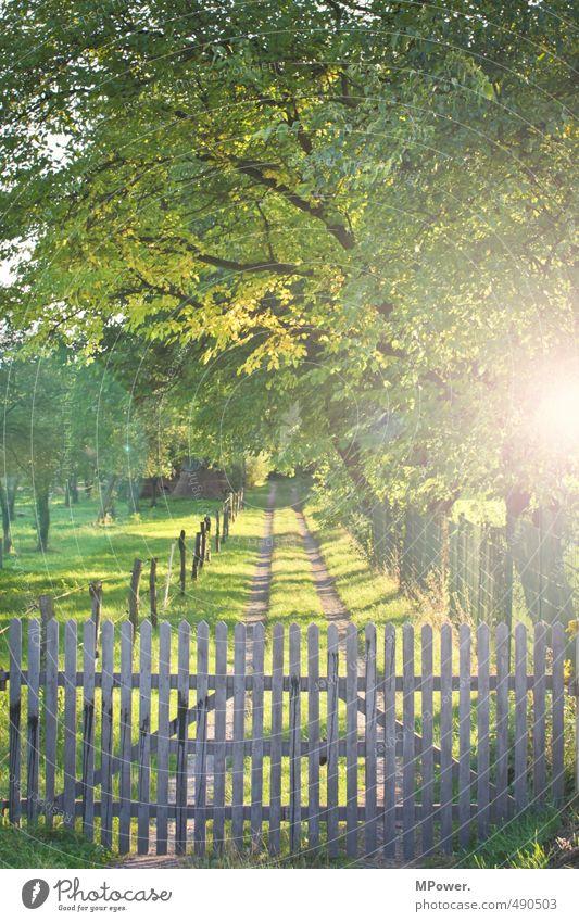 versperrt Natur Herbst Baum Gras Wiese Feld Wald leuchten Fußweg Zaun Tor Holz Wege & Pfade Weide Bauernhof geschlossen Blätterdach grün Spuren Farbfoto