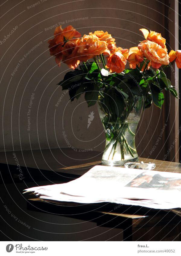 cafe orange Rose Zeitung Aschenbecher Straßencafé Blühend Blumenstrauß Café Gegenlicht Tisch Vase Gastronomie Zeitschrift verblüht robbie williams glasvase