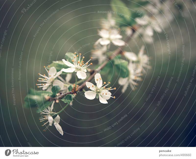 blütenweiß Natur weiß Pflanze Baum Frühling Blüte Lebensfreude Zeichen Vorfreude Ehrlichkeit Frühlingsgefühle Wildpflanze