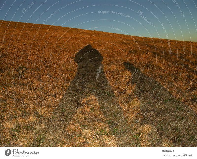 Shadow Sonne blau gelb Wiese Feld