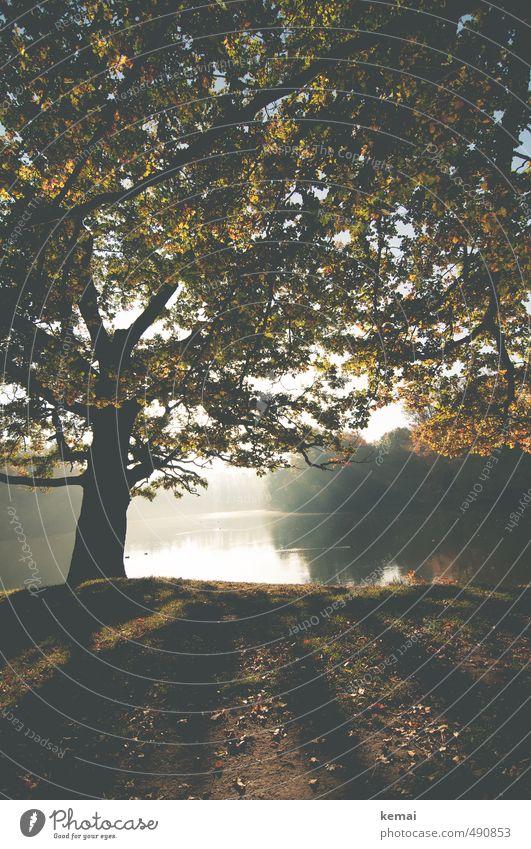 Ein Wiederseen am Bärenseh Natur schön Wasser Pflanze Baum Einsamkeit Landschaft ruhig Blatt Umwelt Herbst See Erde Nebel groß Wachstum