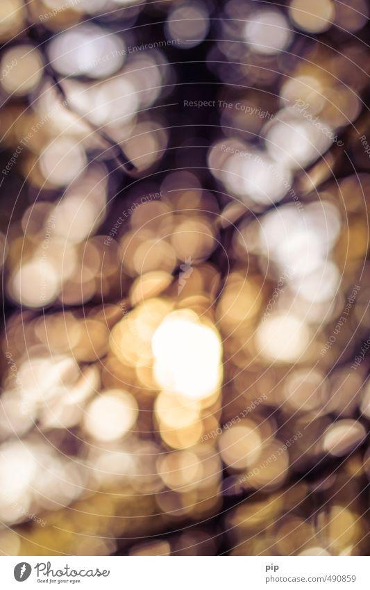 herbstbokeh Wald gelb Wärme hell braun orange glänzend gold Kreis Fleck Lichtspiel