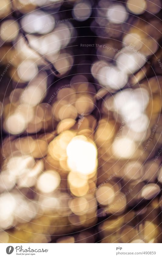 herbstbokeh Wald hell Wärme braun gelb orange Lichtspiel Unschärfe Kreis gold Reflexion & Spiegelung Schwache Tiefenschärfe Fleck glänzend Farbfoto