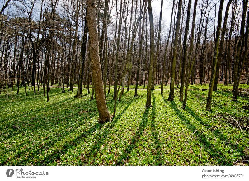 Wald Umwelt Natur Landschaft Pflanze Luft Himmel Horizont Sonne Sonnenlicht Frühling Wetter Schönes Wetter Baum Gras Sträucher Moos Blatt Park Wiese stehen dünn