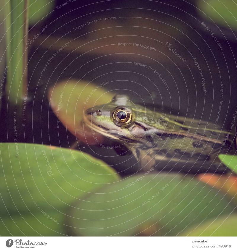 rückblick Natur grün Wasser Pflanze Sommer Erholung Blume Blatt Tier Schwimmen & Baden Garten Urelemente Zeichen Wellness feucht Teich