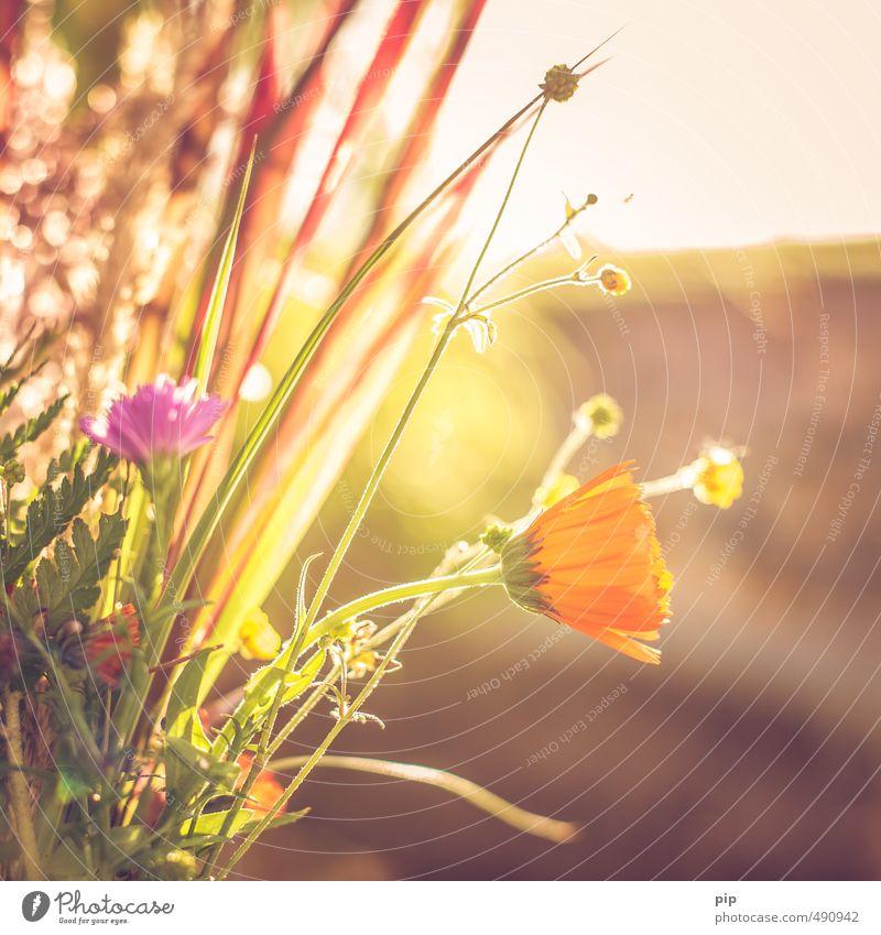 herbstwiesenkräuter Umwelt Natur Pflanze Herbst Schönes Wetter Blume Gras Blüte Nutzpflanze Wildpflanze Park Wiese Feld hell gelb orange Wärme Wiesenblume