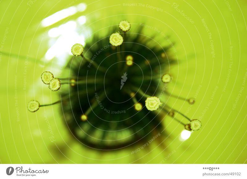 Dingsda Natur Blume grün Pflanze Leben Blüte hoch Perspektive Wachstum Stengel Mangel selten