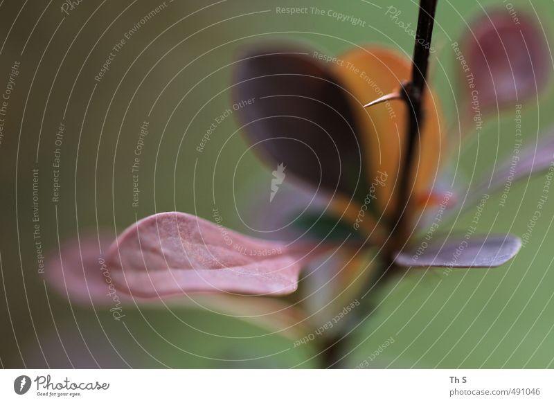 Blatt Natur Pflanze ästhetisch authentisch natürlich Farbe Herbst Wald Farbfoto Außenaufnahme Textfreiraum links