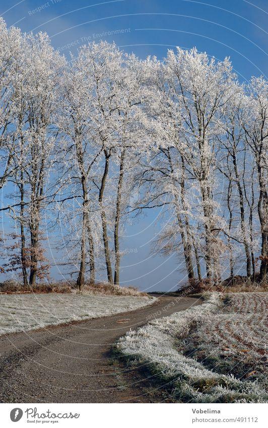 Feldweg bei Raureif Winter Natur Landschaft Wolkenloser Himmel Eis Frost Pflanze Baum Wald kalt blau braun weiß Wege & Pfade Farbfoto Außenaufnahme Menschenleer