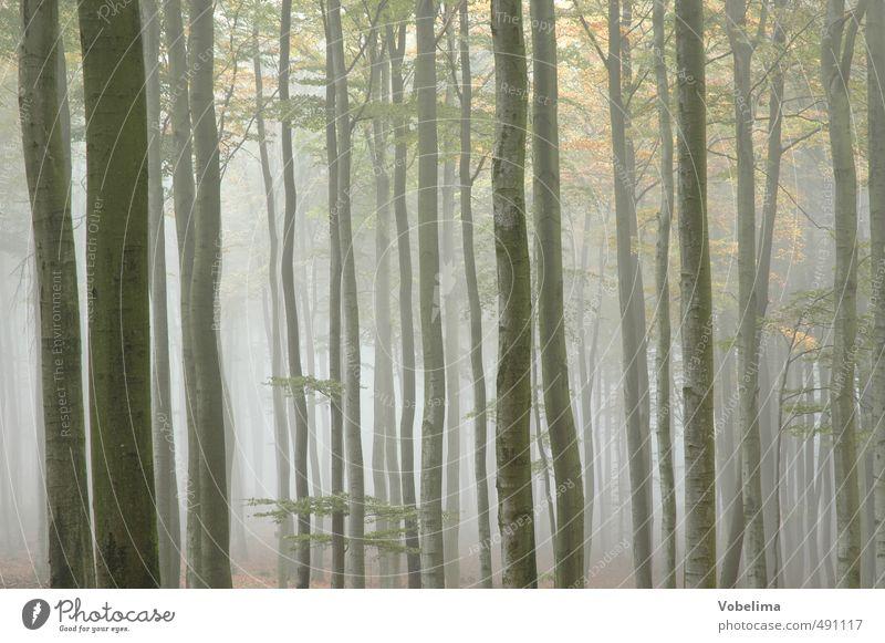 Morgennebel im Wald Natur Landschaft Luft Herbst Wetter Nebel Pflanze Baum blau braun gelb trösten ruhig Hoffnung Glaube Traurigkeit Trauer Farbfoto