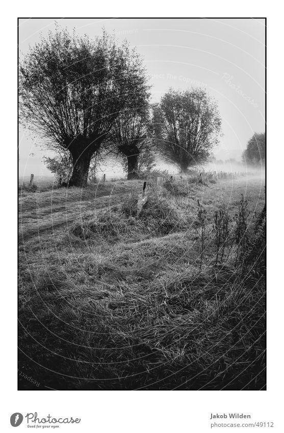 Herbst Farbe dunkel kalt Nebel Seil feucht Digitalfotografie friedlich