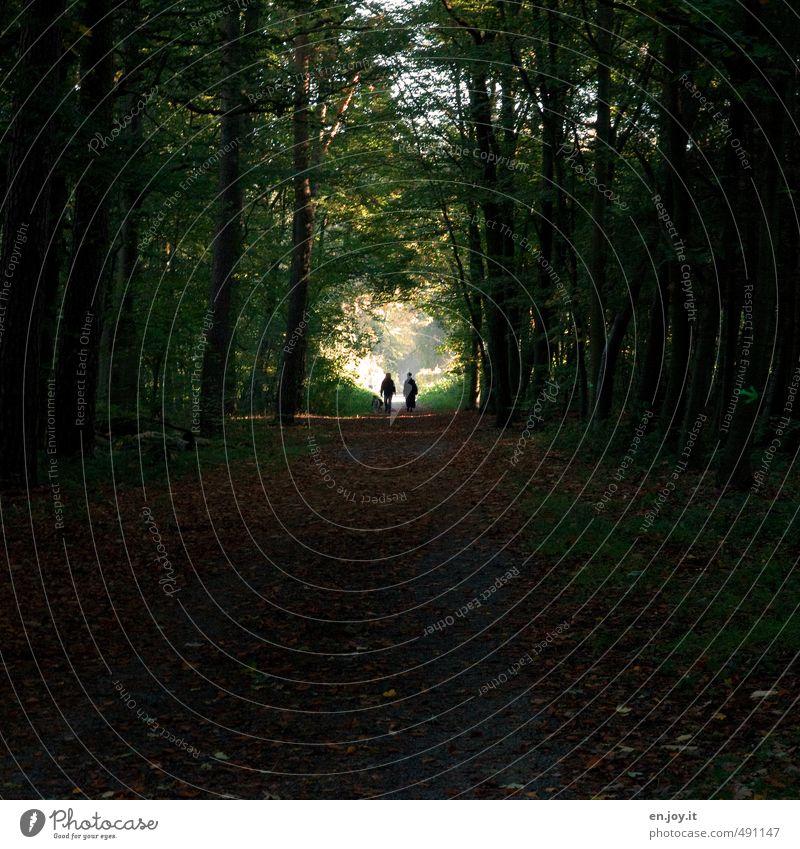 Ausgang? Mensch Paar 2 Natur Landschaft Pflanze Wald Wege & Pfade Hund bedrohlich dunkel grün schwarz Vorfreude Hoffnung Glaube Traurigkeit Sorge Trauer Tod